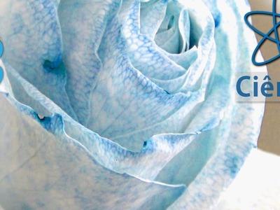Experiências - Mudando a cor de uma Flor