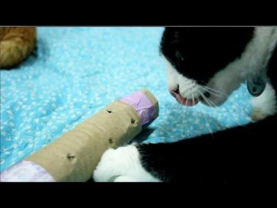 DIY Catnip Puzzle Cat Toy
