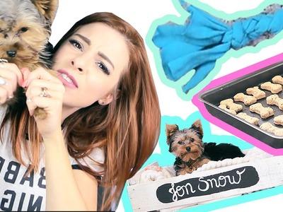 ♥ DIY PETs ♥ Cama de Caixote, Biscoito e T-Shirt Toy
