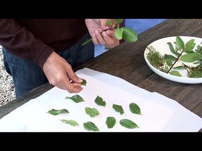Aprenda a secar ervas aromáticas e usar na culinária