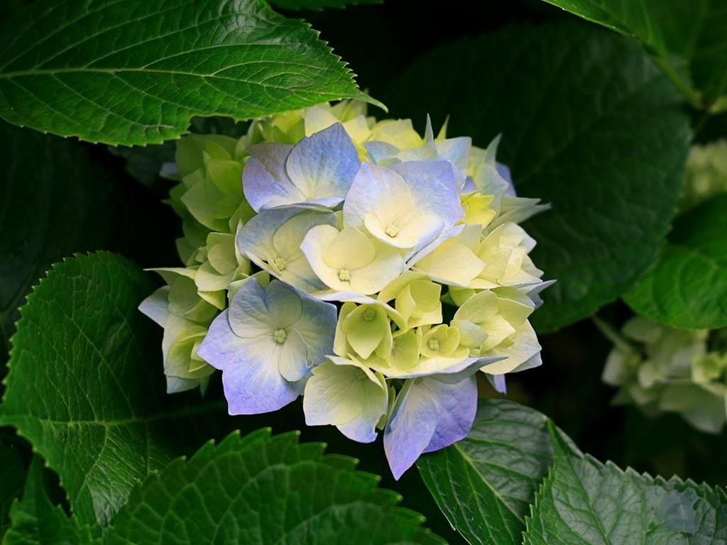 Como fazer Flores com papel higiênico!