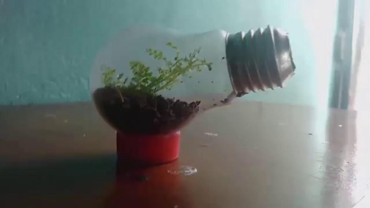 DIY - jardim dentro de uma lampada (terrário em uma lâmpada)