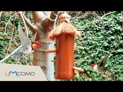 Comedouro Caseiro para pássaros | garrafa PET