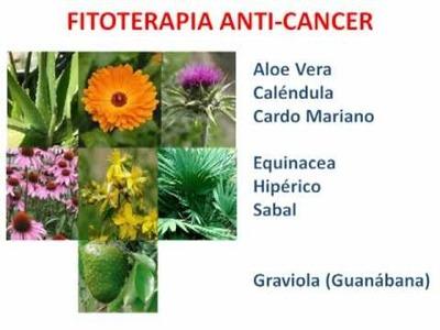 2. Como Prevenir el Câncer de Forma Natural (2ª parte)