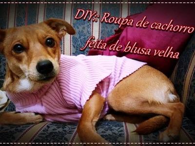 DIY:: Roupa de cachorro feita de blusa velha  DS²