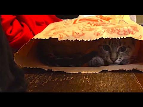 Cats and a paper bag! | gatos e sacola de papel