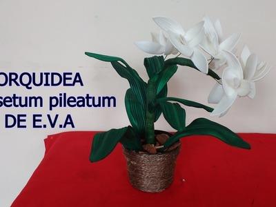 Orquídea ( catasetum pileatum ) de E.V.A