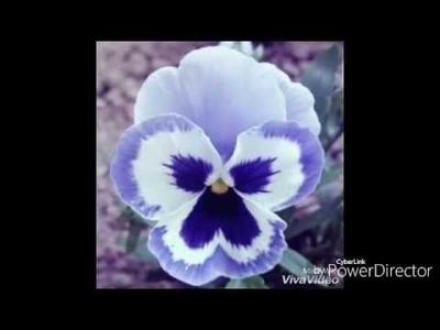 Flor Amor Perfeito De Eva sem Frisador- Por Denise Cardozo